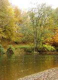 Autumn river running through a forest Stock Images