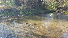 Autumn River Salmon Run in Noord-Amerika/Canada royalty-vrije stock afbeeldingen