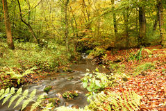 Autumn river scene. The woodlands in a colourful autumn Royalty Free Stock Photography