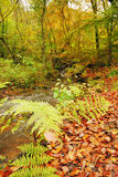 Autumn river scene. The woodlands in a colourful autumn Stock Photo