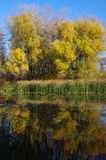 Autumn on the River. Autumn trees reflected in water Stock Photos