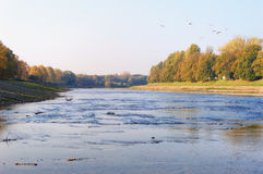 Autumn river landscape. Autumn river valley with yellow leaves on trees along its banks. Some birds - gulls are flying over the clean autumn sky. Calm river Stock Photography