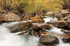 Autumn river in the Wasatch Mountains. Stock Photos