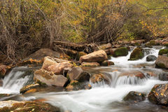 Autumn river in the Wasatch Mountains. Royalty Free Stock Photo
