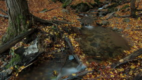 Autumn River water time lapse leaves roots  stock video