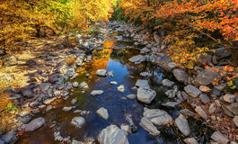 Autumn river with yellow leafs Stock Photo