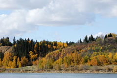 Autumn riverside scene in edmonton Royalty Free Stock Photo