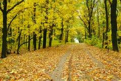 Free Autumn Road Stock Image - 10936231