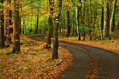 Autumn road. View of forest way in autumn period in month October Royalty Free Stock Images