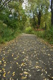 Autumn road. In the park in the leaves Stock Image