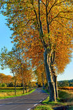 On the autumn road Royalty Free Stock Photography