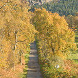 Autumn road ? Royalty Free Stock Image