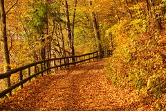 Autumn road. Royalty Free Stock Photos