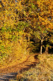Autumn road. A gravel road covered with yellow leaves royalty free stock photography