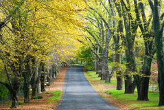 Autumn Road. Glorious road in autumn with gold colour tree lines Stock Photos