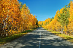Autumn road. Stock Images