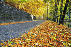 Autumn Road. A coblestone road in an autumn day stock images