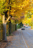 Autumn road. Quiet road in a neighborhood during the autumn season Stock Photography