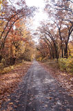 Autumn Road. Autumn fall road surrounded by red and yellow leave trees Royalty Free Stock Photos