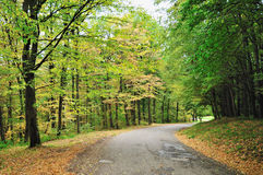 Autumn road. Empty road winding through early autumn forest Royalty Free Stock Images