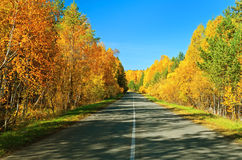 Autumn road. Royalty Free Stock Photo