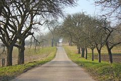 Autumn road. Lonely road with leafless fruit trees in autumn Stock Photos