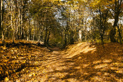 The autumn road Royalty Free Stock Image