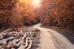 Autumn Road and Harvested Trees Royalty Free Stock Photo