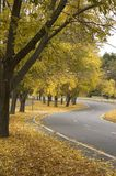 Autumn Road. A road in New England, on a fall day, with yellow leaves falling all along the roadside stock photos