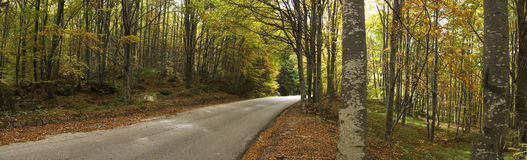 Autumn road. Panoshot of a road through the autumn forest Royalty Free Stock Photography