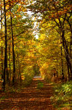 Autumn road Royalty Free Stock Image