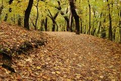 Autumn Road Stock Photography