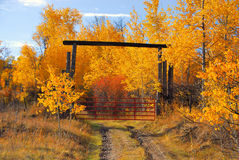 Autumn Road. A gate closing the road into Autumn colors Royalty Free Stock Images
