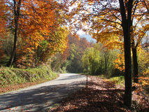 Autumn road. Colorful nature stock photography
