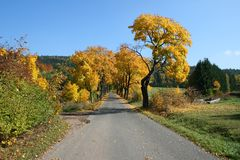 Autumn road. With many coloured maple trees Stock Images