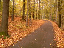 Autumn road. Autumn  in the forest, leaves on the road Royalty Free Stock Photos