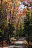 Autumn Road Acadia Maine. Over hills and through woods filled with autumn's colors, this country road is located on Mount Desert Island, Maine, near Acadia Royalty Free Stock Photography