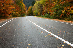 Autumn road Royalty Free Stock Images