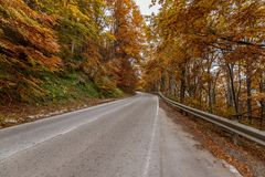 Autumn road. Autumn road . beautiful bright autumn road landscape. red leaves on the trees stock image