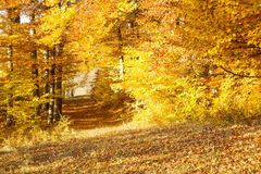 Autumn road in the beech forest,nature landscape Stock Photos