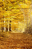Autumn road in the beech forest,nature landscape Stock Image