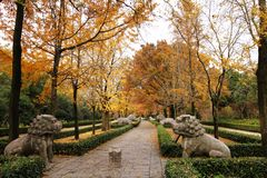 Autumn road in china Royalty Free Stock Images