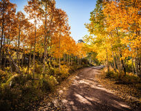Autumn Road in Colorado. Changing aspen trees line a dirt road in the Colorado San Juan mountains stock image