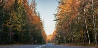 Autumn road colours.autumn landscape road, fallen leaves fall color stock images