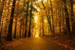 Autumn road in Czech Republic. Autumn forest road in South Bohemian region. Czech Republic stock photo