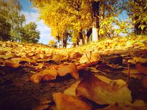 Autumn road. In day Stock Photos