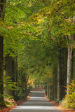 Autumn road in Dutch national park Veluwe Royalty Free Stock Photography