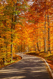 Autumn road - enhanced colors Stock Image