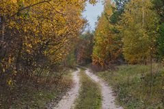A way through the evening autumn forest. Around the trees with yellow leaves. Autumn road in the evening in a deciduous forest. There are a lot of yellow leaves Royalty Free Stock Photos