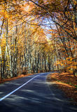 Autumn Road. Faget forest in autumn season and the road to Cluj Napoca Stock Photography